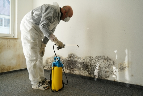 mold-a-microbial-remediation